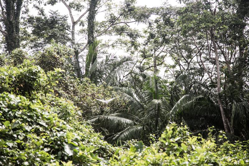 Giungla, Nicaragua -