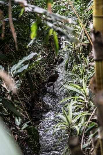 Wild Costa Rica -